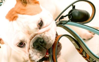 Hond uit het buitenland
